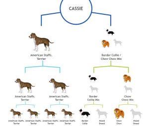 Cassie Tree