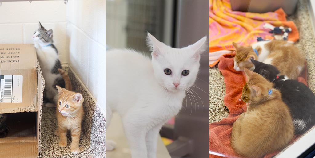 Kitten Collage